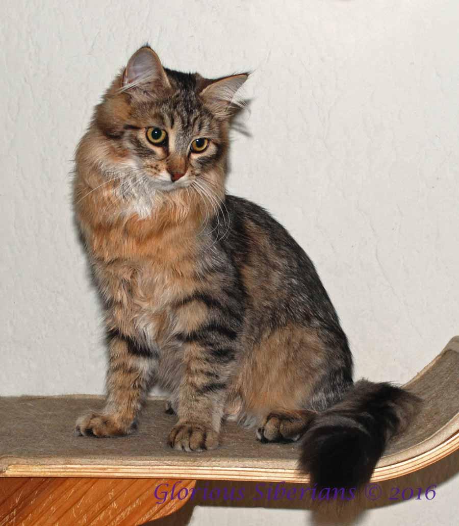 Cougar Crest photo taken 9/27/16