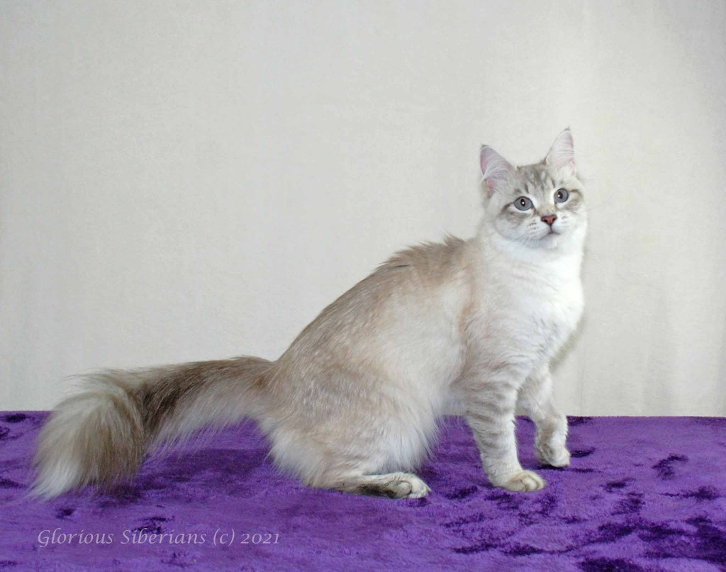 Glorious Elizabeth Taylor is looking for her forever home