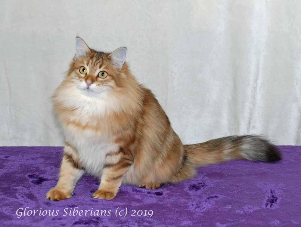 Glorious Princess Meghan