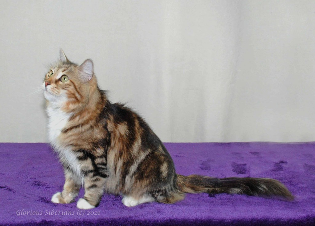 Glorious Moonstone is looking for her forever home