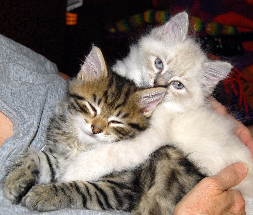 Pricing Hypoallergenic Cats