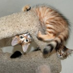 Cat tree play