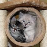 Kitten Gallery