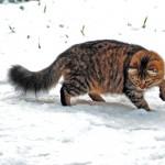 Fiona hunting