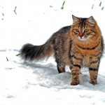 Fiona in the snow