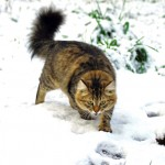 Fiona in spring snow