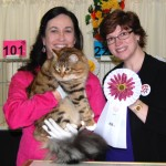 Jasper 8th Best All Breed Cat  11 months