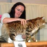 Jasper being judged Tica Show 2013
