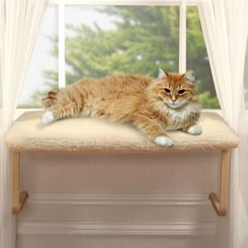 suggested equipment hypoallergenic cats. Black Bedroom Furniture Sets. Home Design Ideas